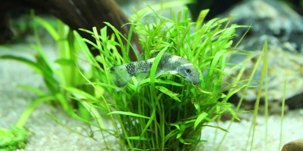 Best Freshwater Aquarium Plants