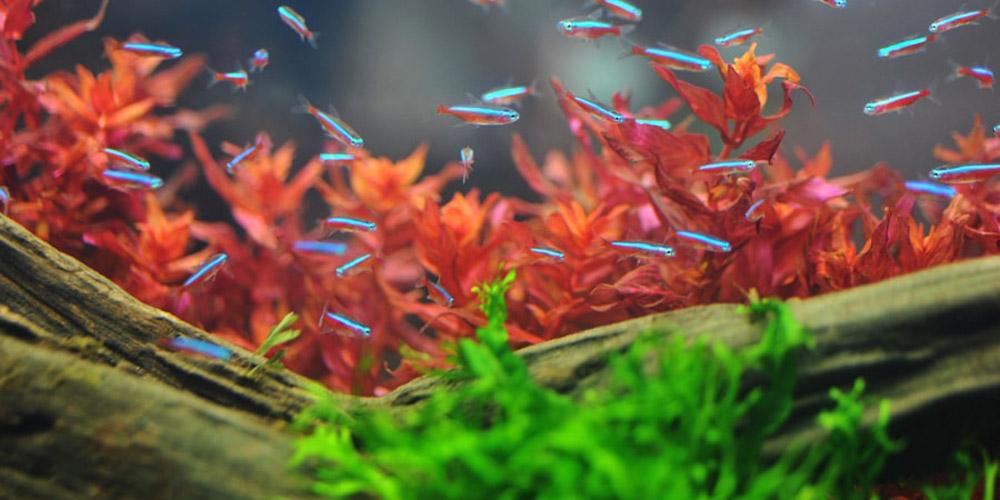 Keep and Maintain Healthy Aquarium Plants