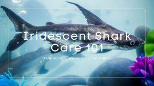 Iridescent-Shark