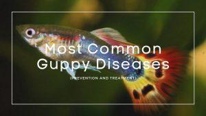 Guppy Diseases