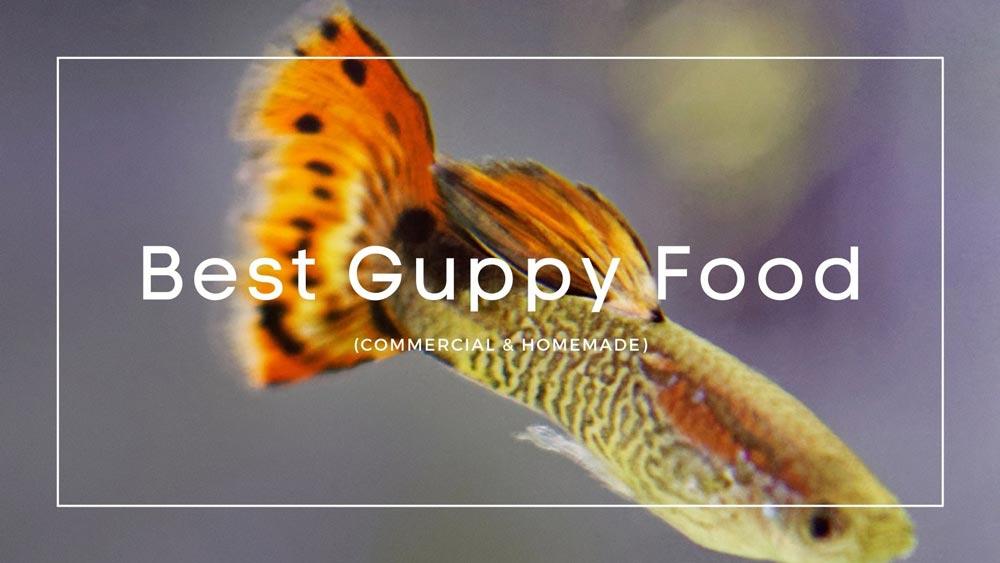 Best-Guppy-Food