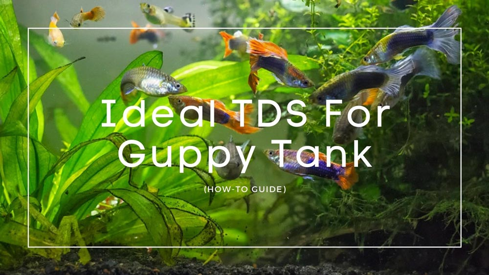 TDS-For-Guppy-Tank