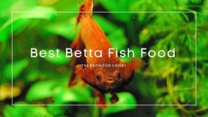 Best Betta Fish Food