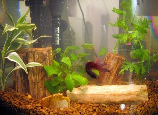 Betta Fish Tank Heater