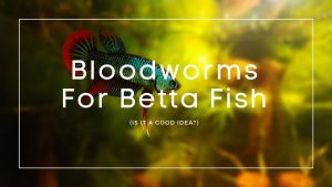 Bloodworms For Betta Fish