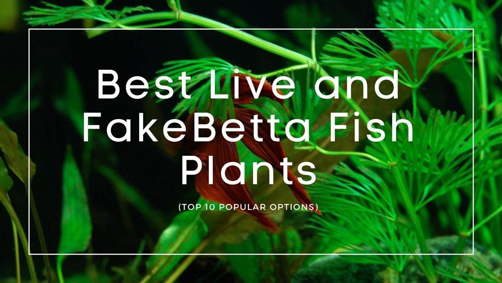 Betta Fish Plants