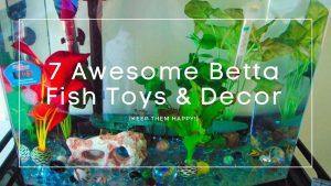 Betta Fish Toys