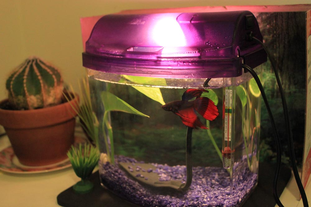 Betta in a one gallon tank