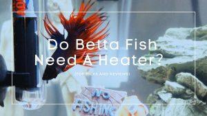 Do Betta Fish Need A Heater