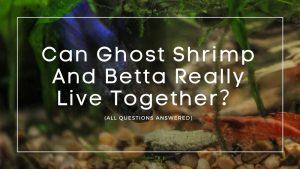 Ghost Shrimp And Betta