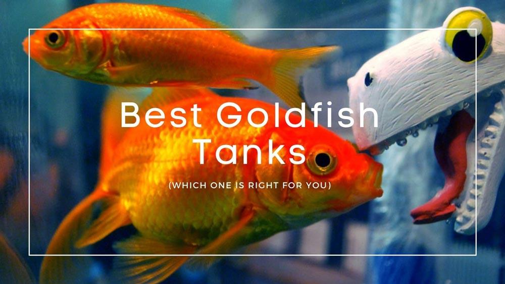 Best Goldfish Tanks