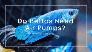 Do Bettas Need Air Pumps