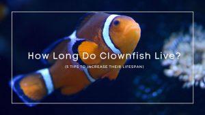 How Long Do Clownfish Live