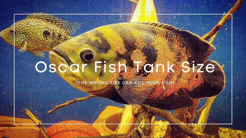 Oscar Fish Tank Size