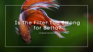 Is The Filter Too Strong for Betta