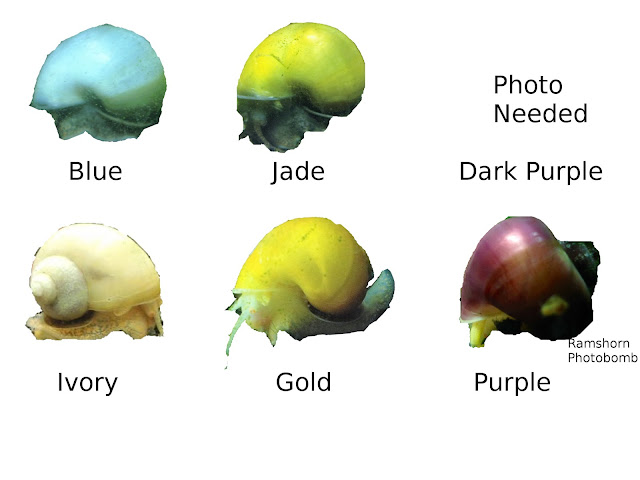 Basic Colors of Mystery Snail